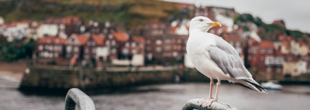 Whitby Harbour North Yorkshire
